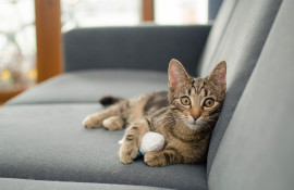 Какой диван и ткань выбрать, если в доме животные?