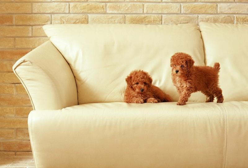 Какой диван выбрать, если дома животные?
